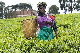 AGRI_GENERIC_WOMENWORKER2.jpg