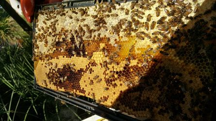 Bee hive.jpg