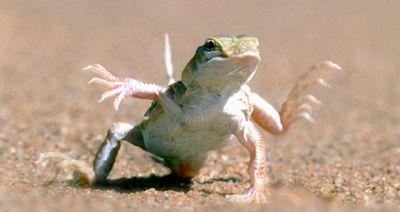 Dancing lizard.jpg